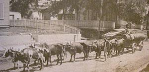 Cattledrive3